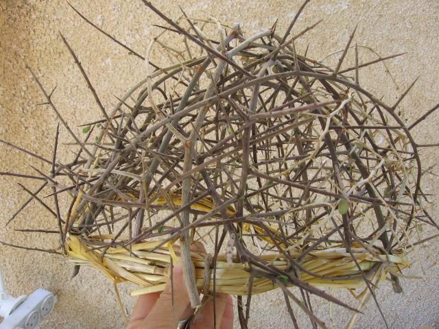 Photo 9. Helmet of thorns made in Israel