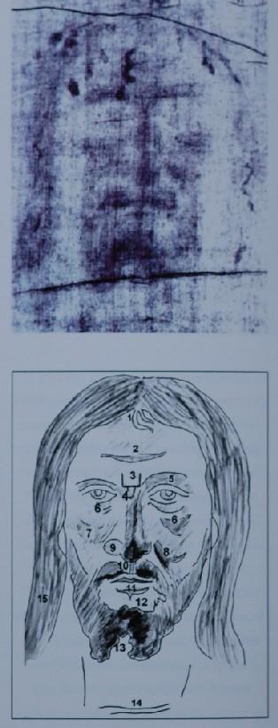 Photo 6. Vignon markings (see 20)