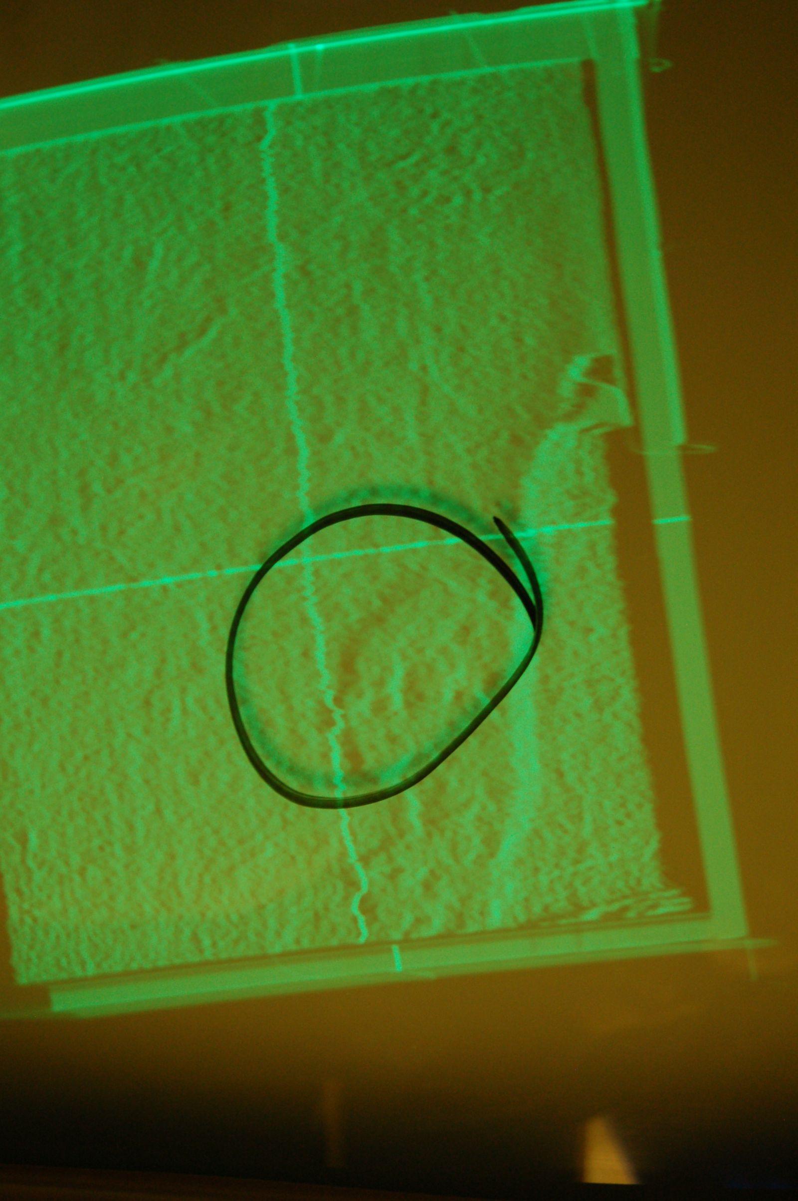 Photo 5. VP8 Image Analyzer spear wound in 3D