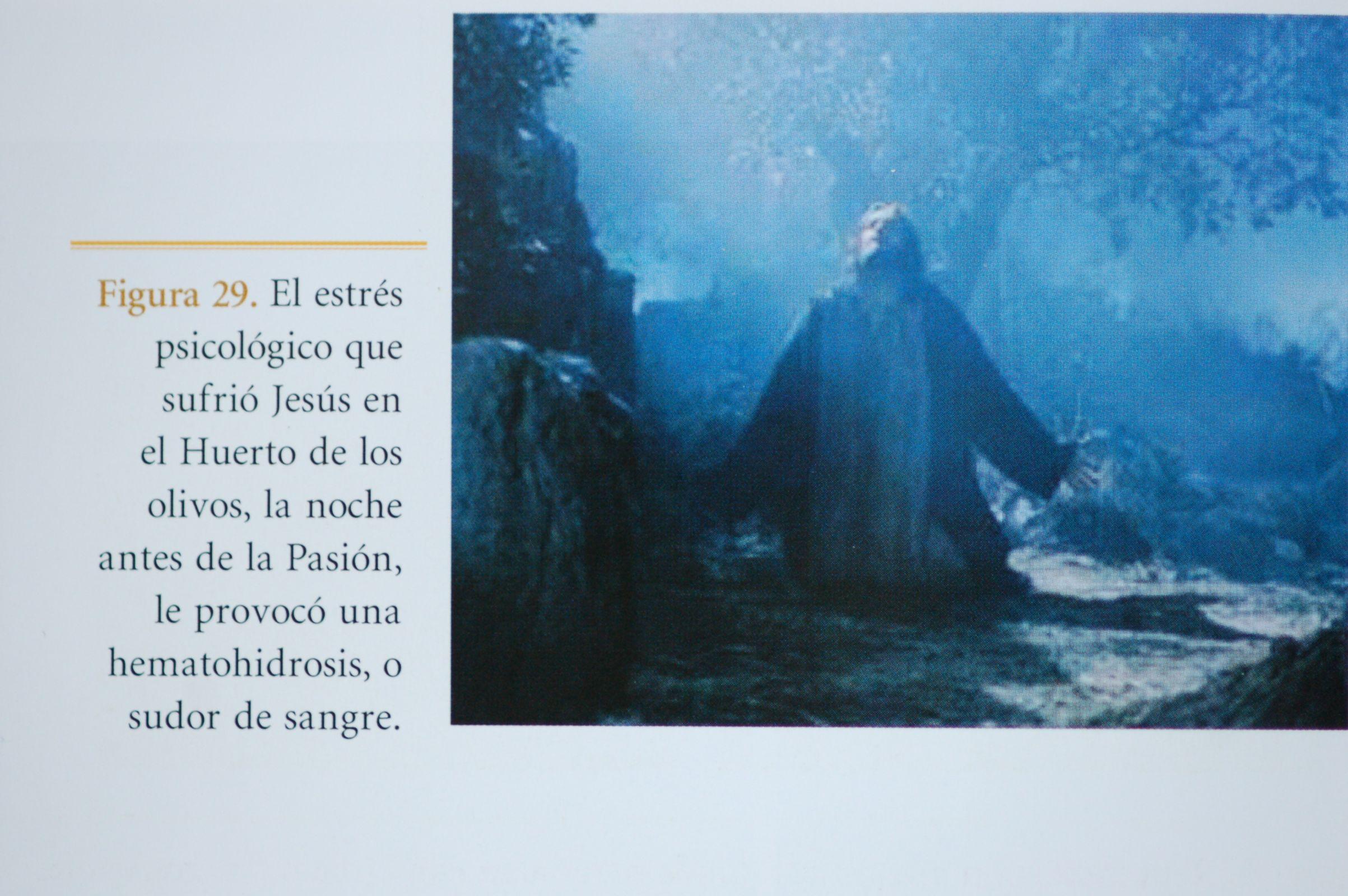 Photo 1. Gethsemane