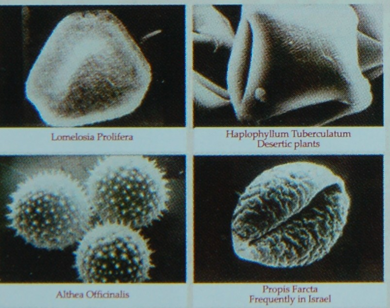Photo 4. Examples of Different Pollen